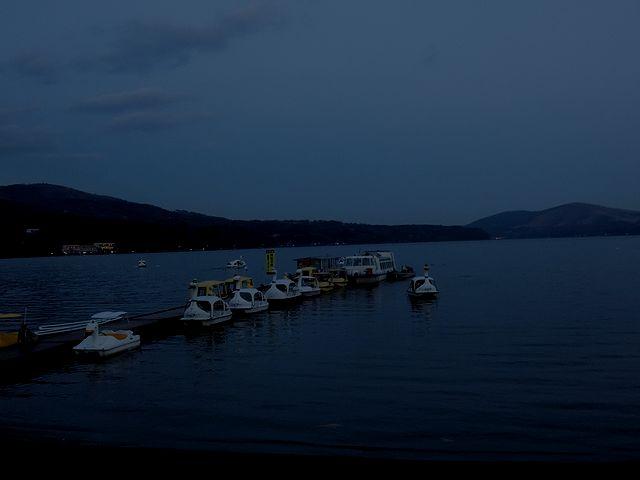 山中湖,スワン