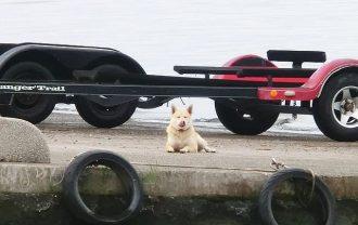 霞ヶ浦 自由犬